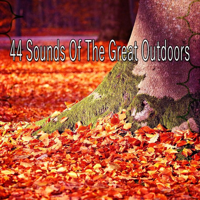 44 Sounds of the Great Outdoors