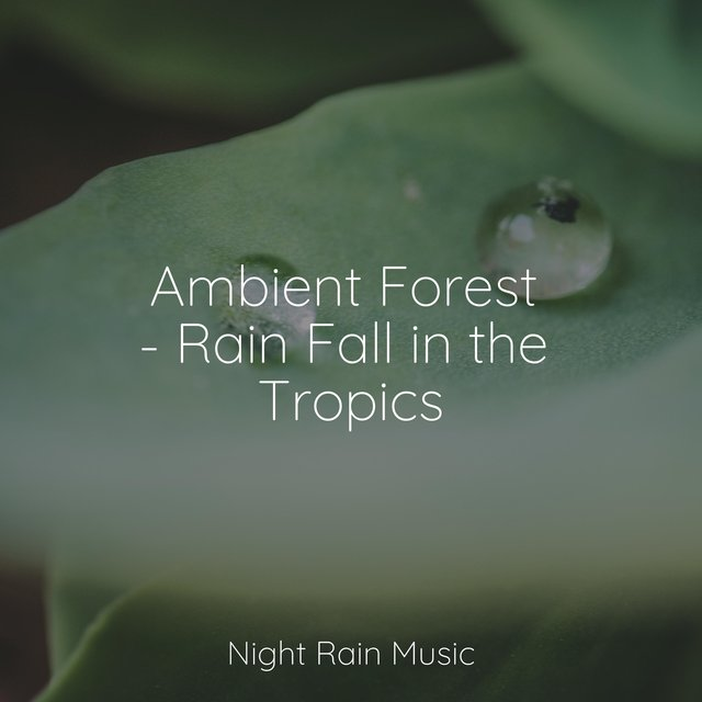 Ambient Forest - Rain Fall in the Tropics