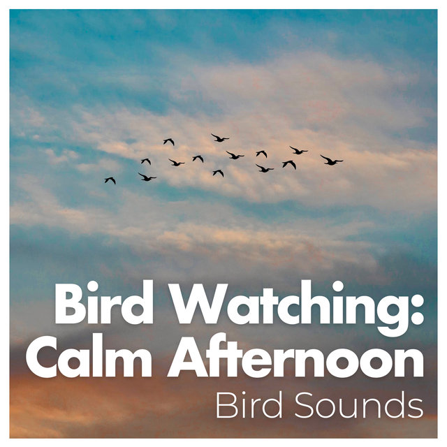 Bird Watching: Calm Afternoon