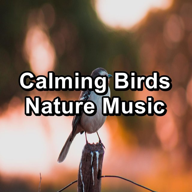 Relaxing Bird Songs Nature Sounds