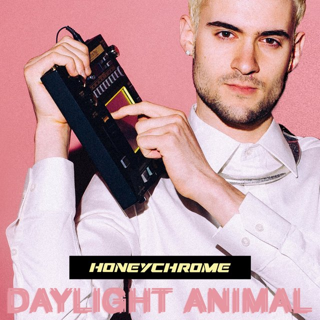 Daylight Animal