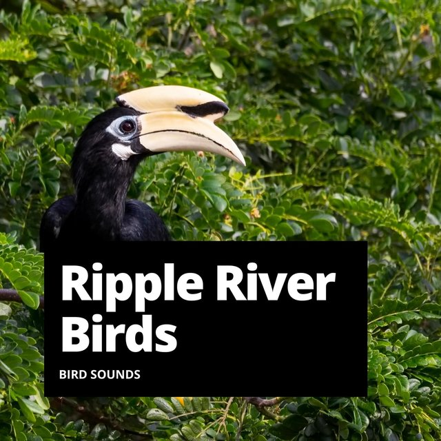 Ripple River Birds
