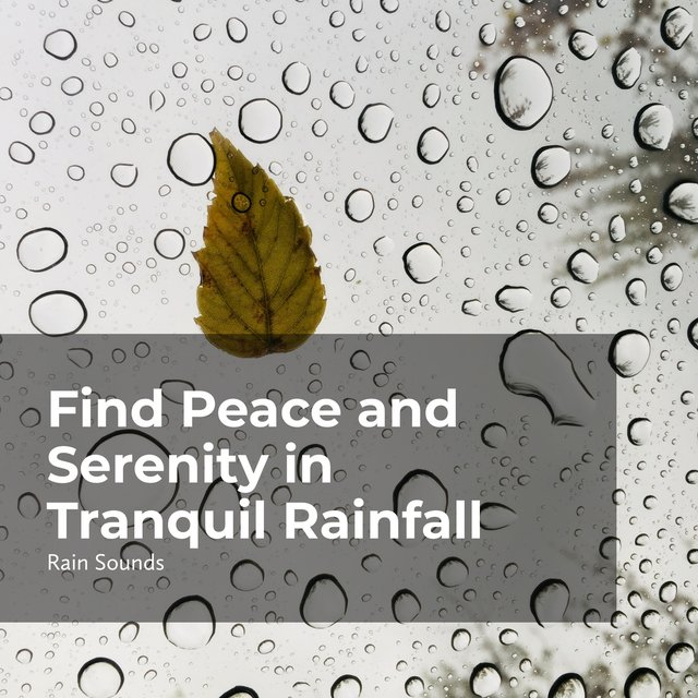 Find Peace and Serenity in Tranquil Rainfall