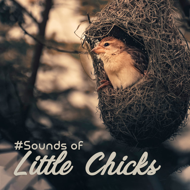 #Sounds of Little Chicks: 15 Songs with the Background of Nature and Singing of Birds for Simply Relaxation, Ambient Music, Melodies of Piano, Feel Better with Amazing New Age Music