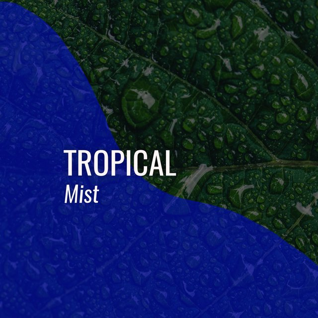 # 1 Album: Tropical Mist