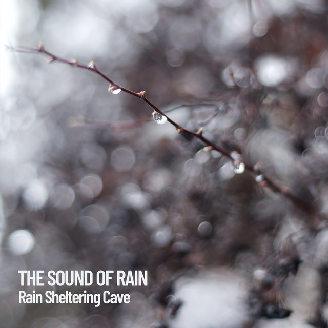 The Sound of Rain: Rain Sheltering Cave