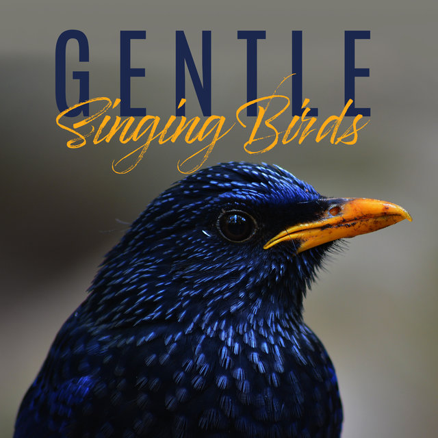 Gentle Singing Birds: 15 Best Relaxing New Age Sounds of Nature, Birds, Forest, Stress Relief, Healing Therapy, Soothing Melodies Played on Piano
