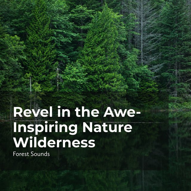 Revel in the Awe-Inspiring Nature Wilderness