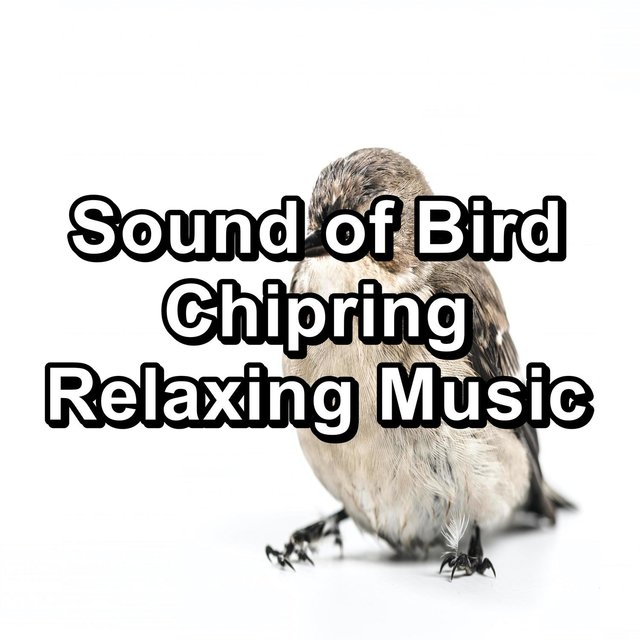 Sound of Bird Chipring Relaxing Music
