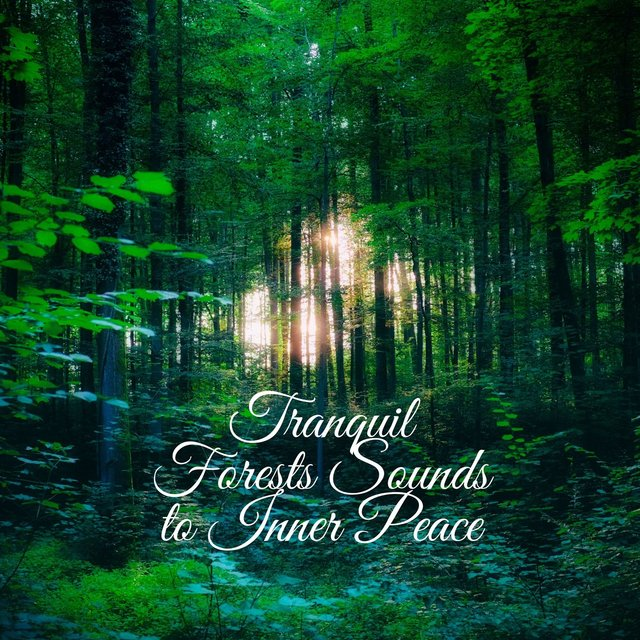 Tranquil Forests Sounds to Inner Peace