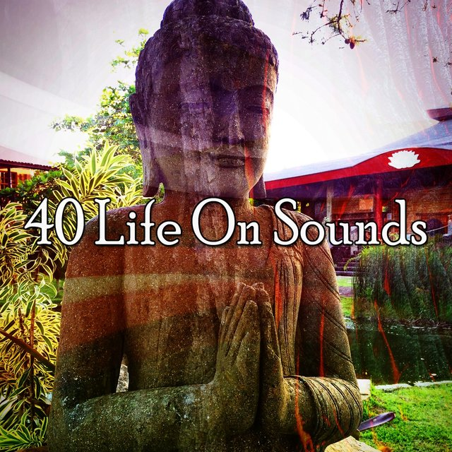 40 Life on Sounds