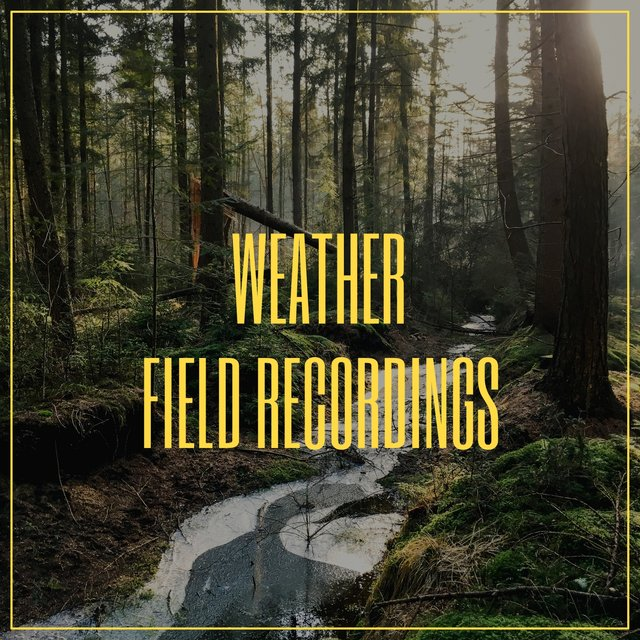 Reflective Native Weather Field Recordings
