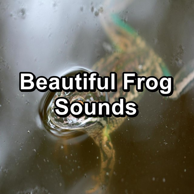 Beautiful Frog Sounds