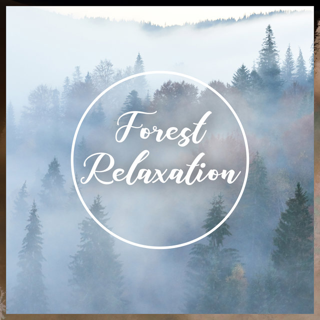 Forest Relaxation – Harmony and Balance, Blissful Nature, Relax
