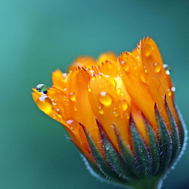 25 Beautiful Nature Rain Recordings for Sleep and Relaxation