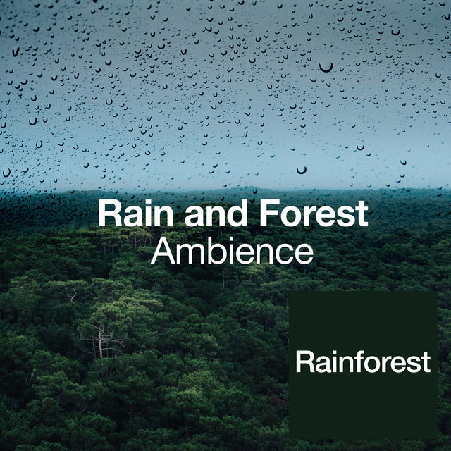 Rain and Forest Ambience