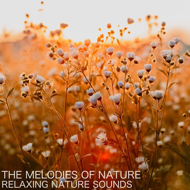 The Melodies of Nature (Relaxing Nature Sounds)