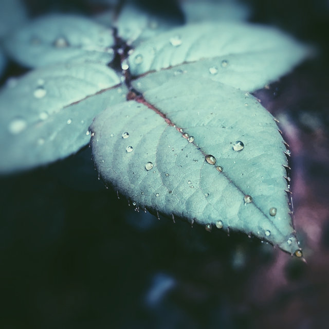 35 Loopable Natural Rain Sounds for Serenity