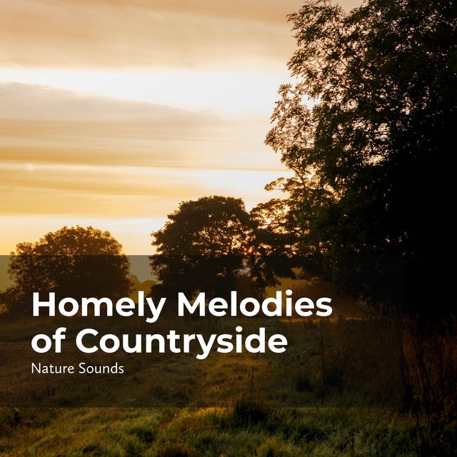 Homely Melodies of Countryside