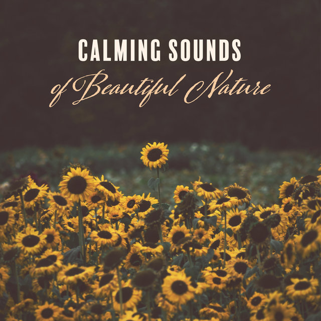 Calming Sounds of Beautiful Nature