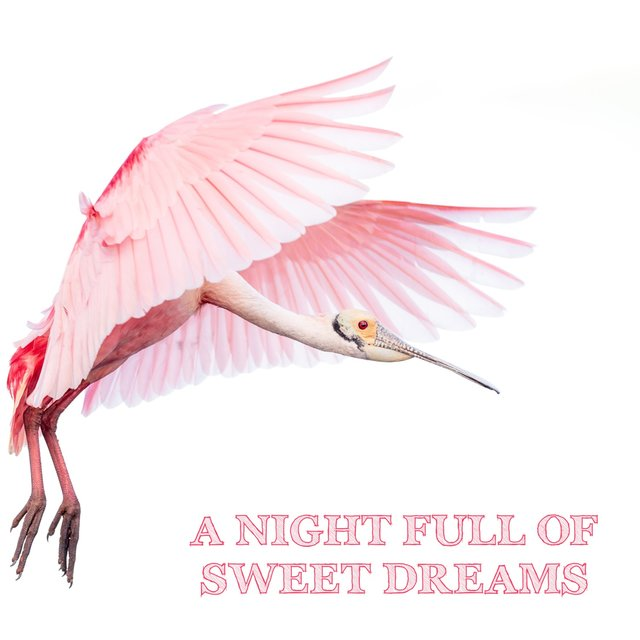 A Night Full of Sweet Dreams