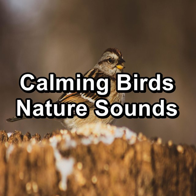 Calming Birds Nature Sounds