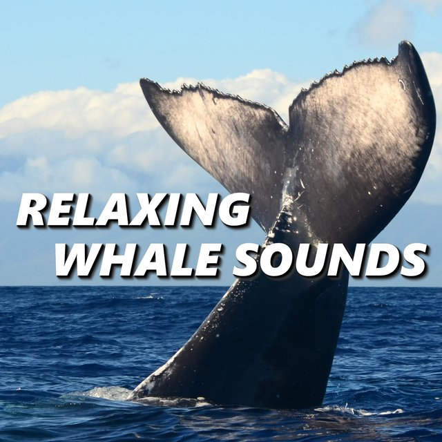 Relaxing Whale Sounds