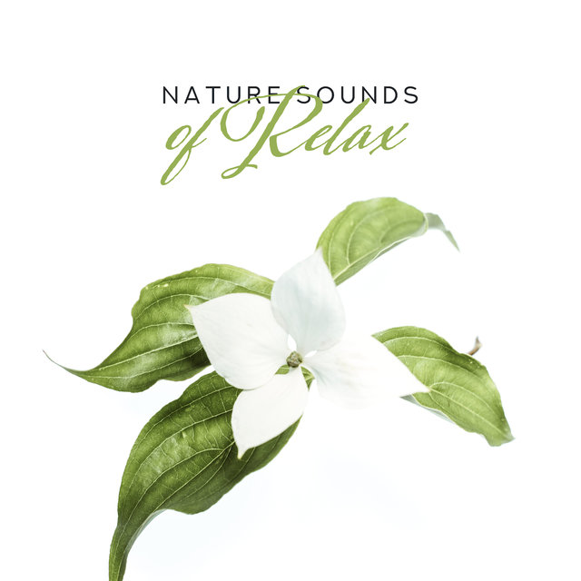 Nature Sounds of Relax: New Age Fresh 2019 Music Collection, Relaxing Nature & Ambient Sounds, Deep Rest, Calming Down, Inner Meditation Songs