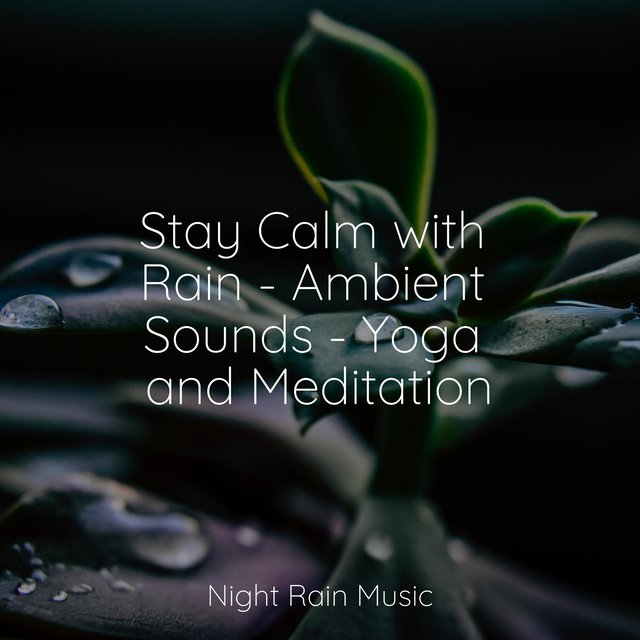 Stay Calm with Rain - Ambient Sounds - Yoga and Meditation