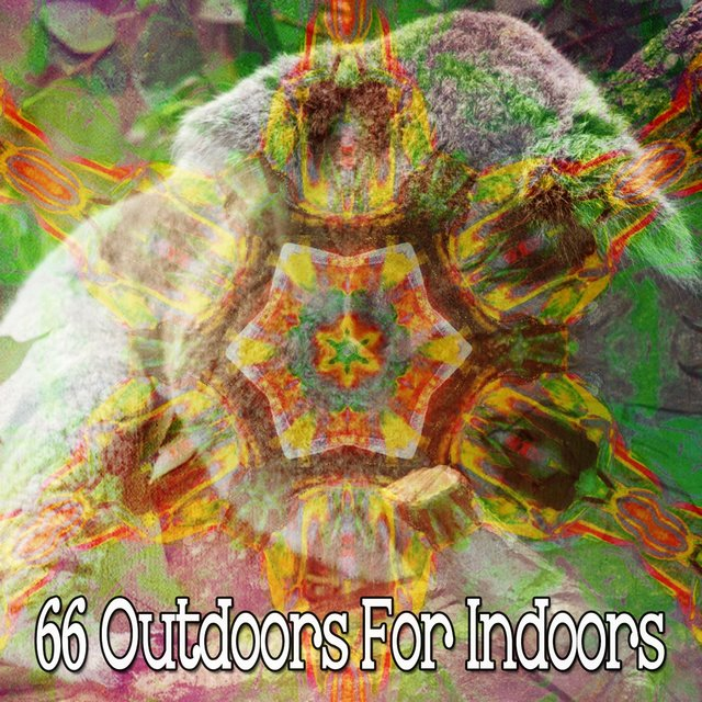 66 Outdoors for Indoors