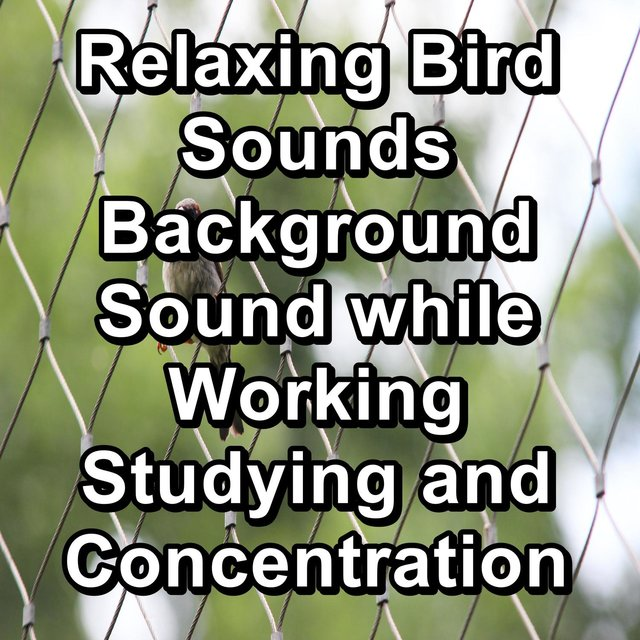 Relaxing Bird Sounds Background Sound while Working Studying and Concentration