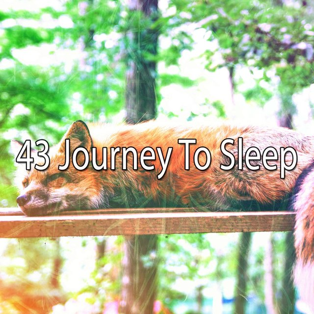 43 Journey to Sleep