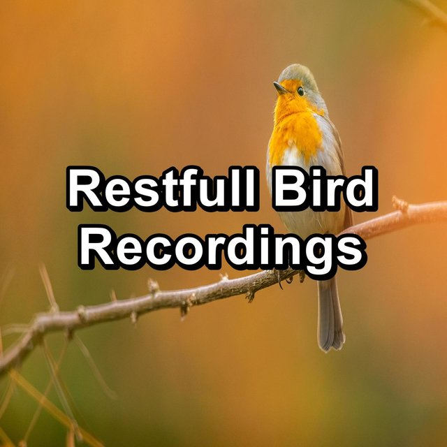 Restfull Bird Recordings