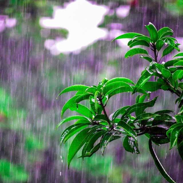 35 Best Nature Sounds for Better Sleep - Tropical Rain