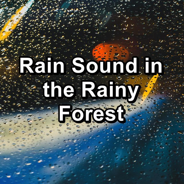Rain Sound in the Rainy Forest