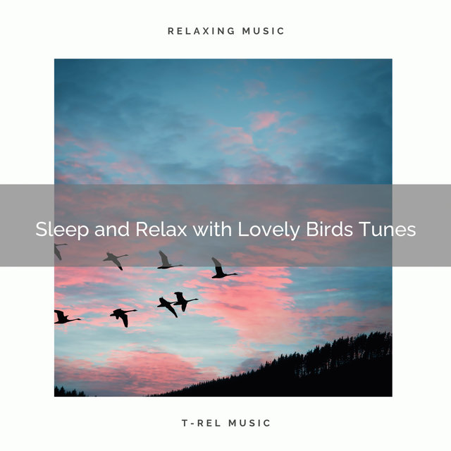 2021 New: Sleep and Relax with Lovely Birds Tunes