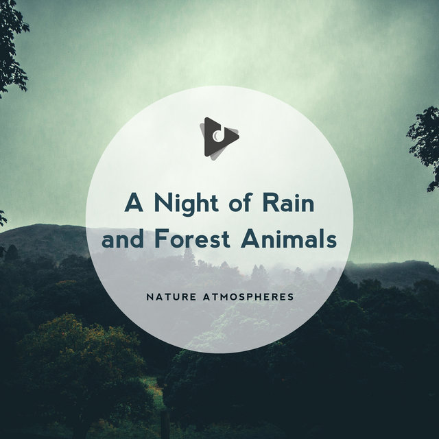 A Night of Rain and Forest Animals