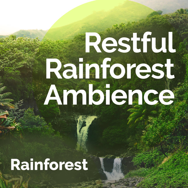 Restful Rainforest Ambience
