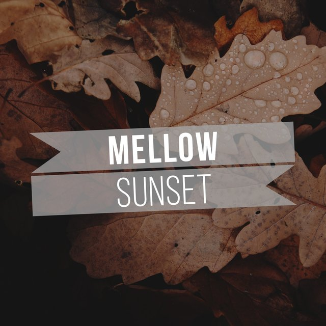 # Mellow Sunset