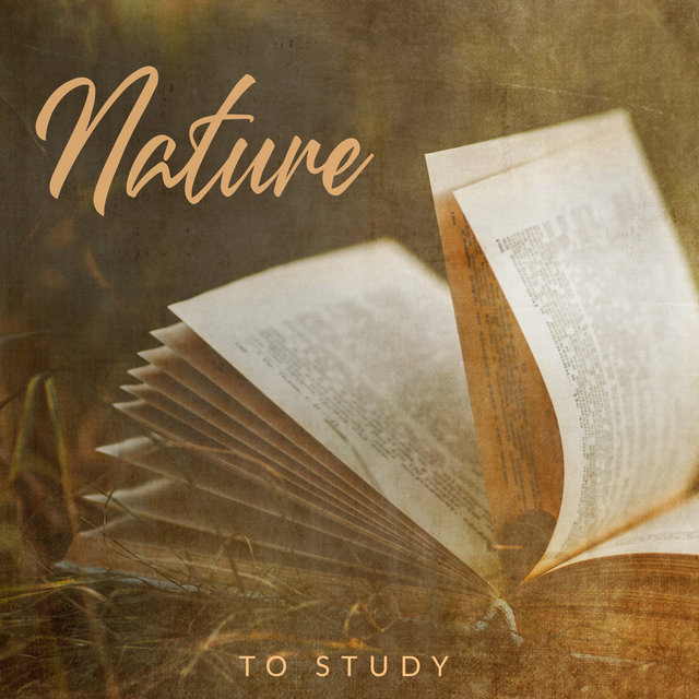 Nature to Study: Relaxing Music to Help you Concentrate and Focus, Easier to Absorb Knowledge