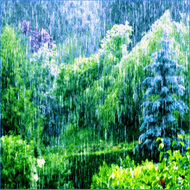 The Living Forest Rain