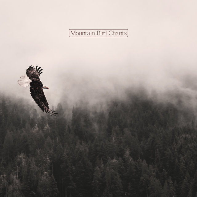 Mountain Bird Chants - Relaxing Sounds of Birds Combined with Instrumental Melodies Will Let You Break Away from Urban Traffic