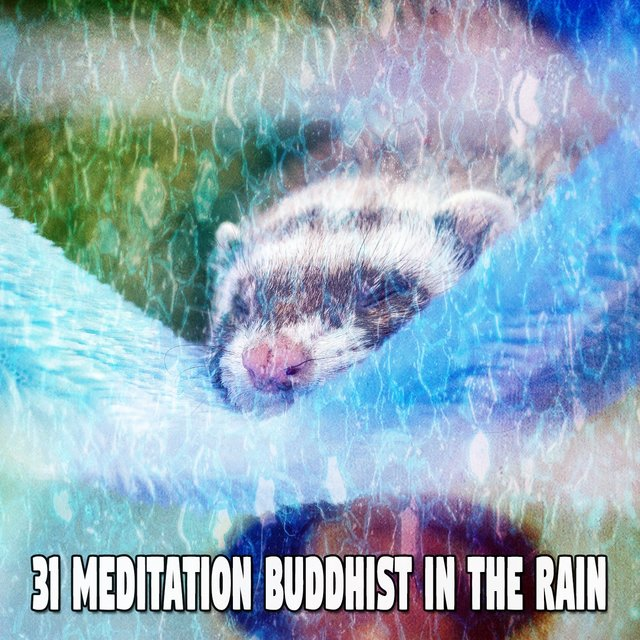 31 Meditation Buddhist in the Rain