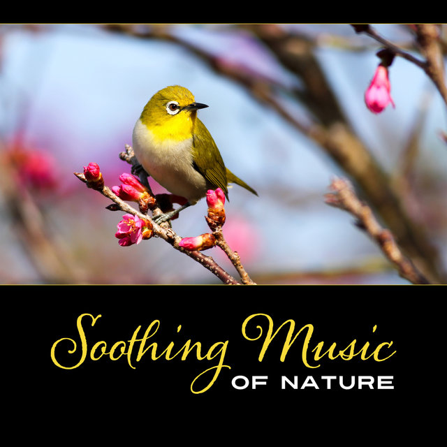 Soothing Music of Nature