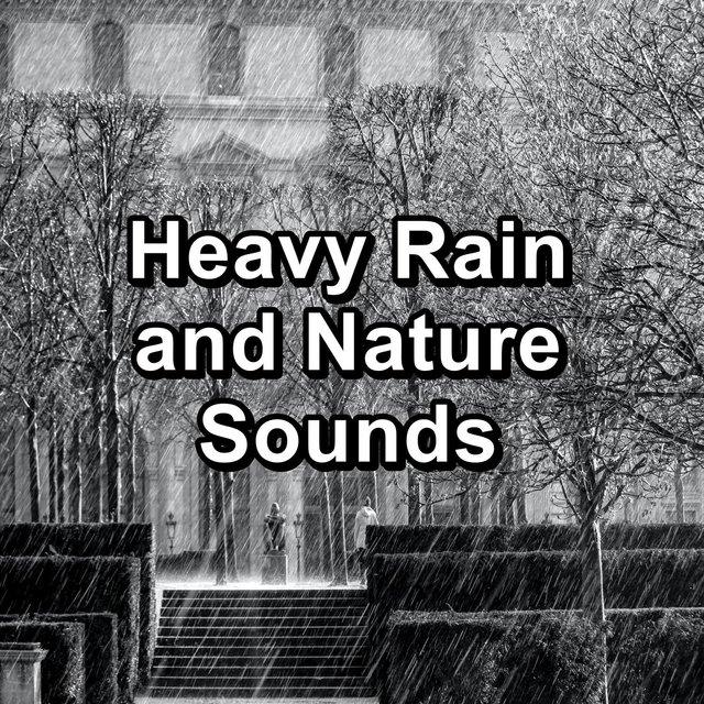 Heavy Rain and Nature Sounds
