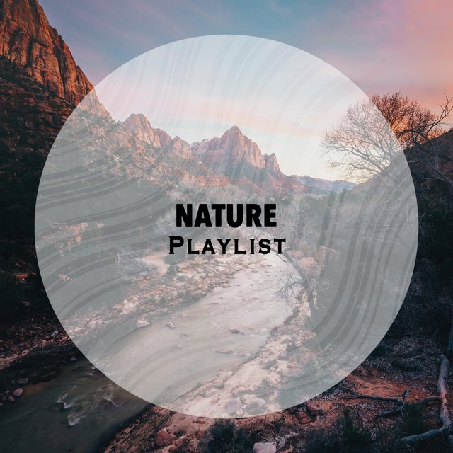 Reflective Native Nature Playlist