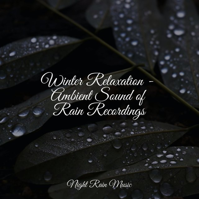 Winter Relaxation - Ambient Sound of Rain Recordings