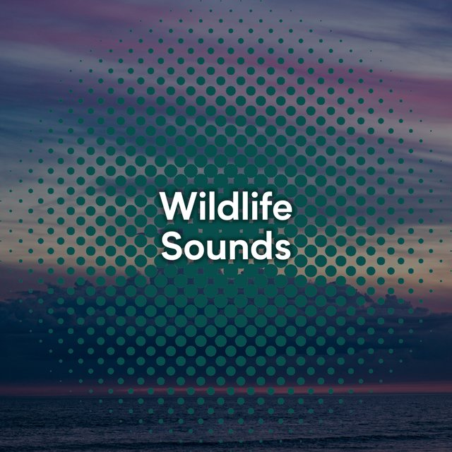 Looping Garden Wildlife Sounds