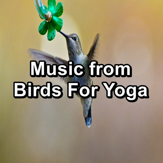 Music from Birds For Yoga