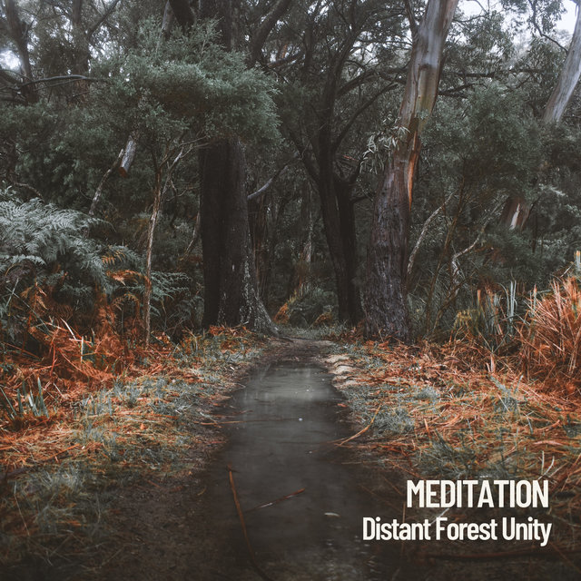 Meditation: Distant Forest Unity
